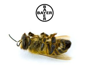 The Bee's Buck Stops with Bayer